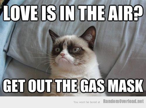 5fd6funny-grumpy-cat-love-pillow