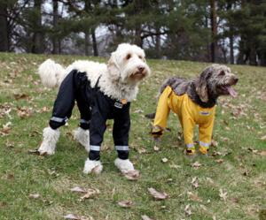 puppypants