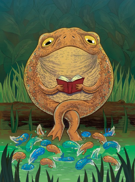 toad-front